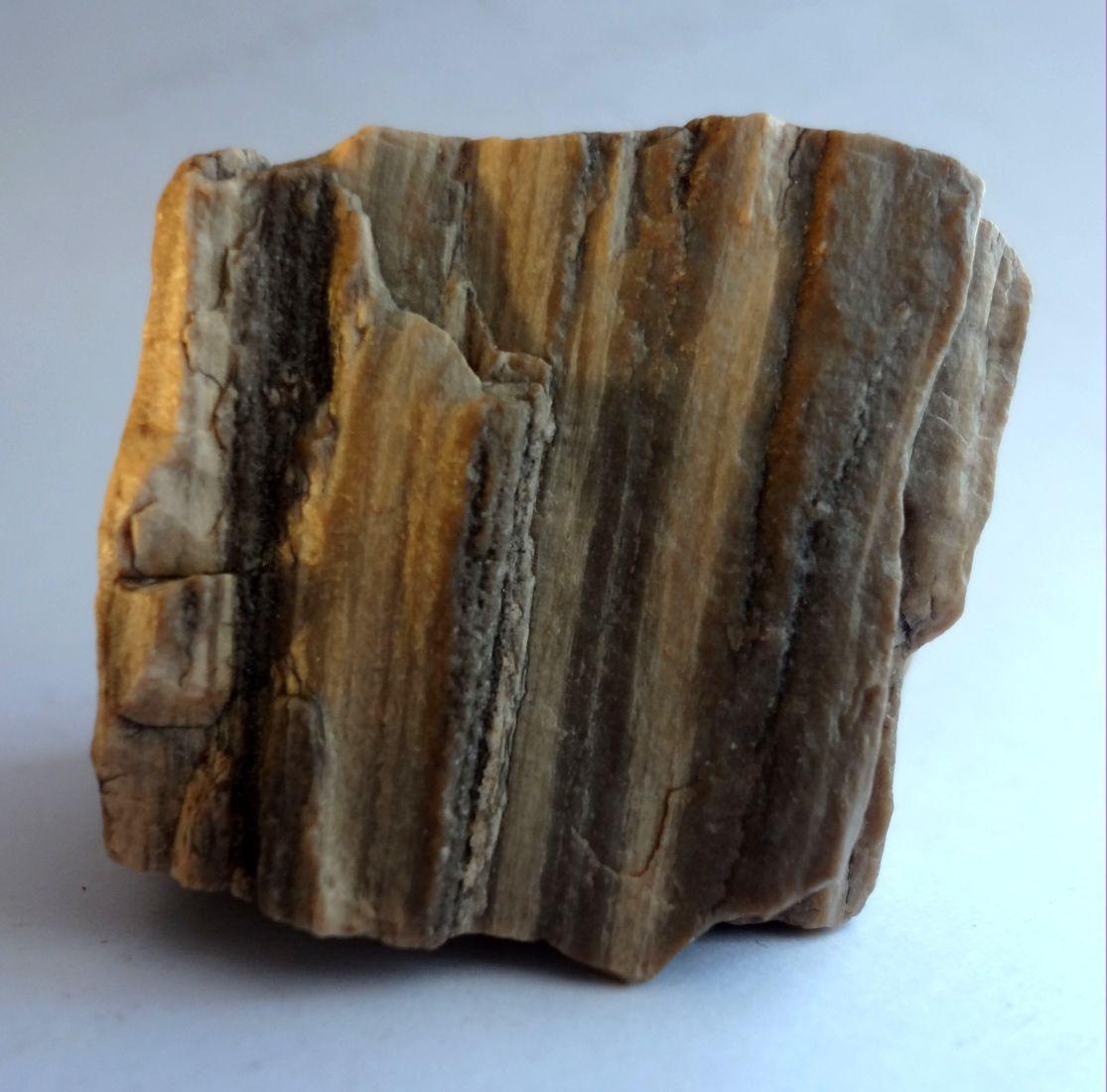 Окаменелое дерево камень фото